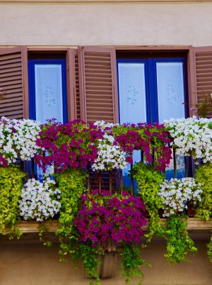Rome balcony flowers