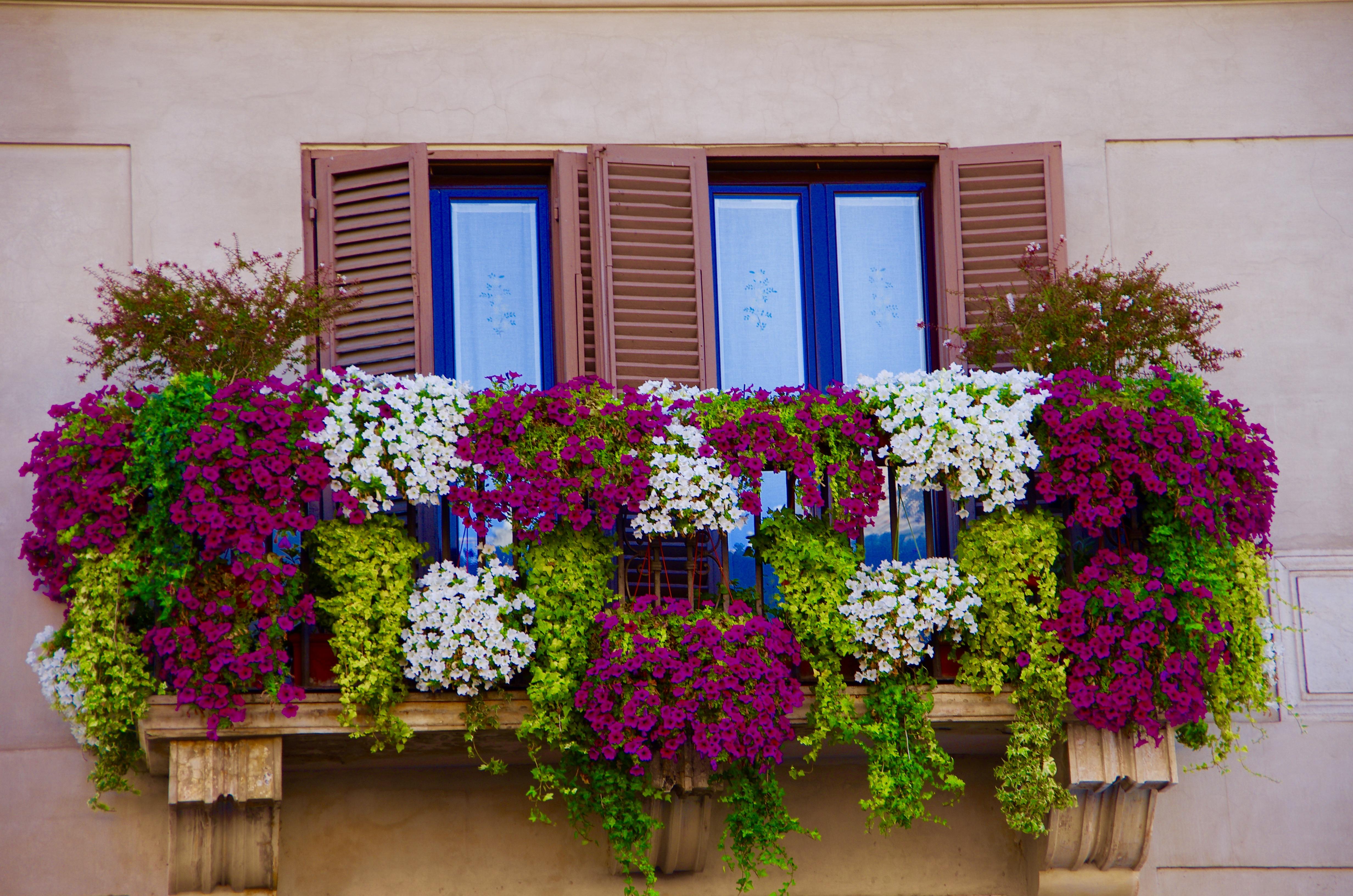 Rome balcony flowers